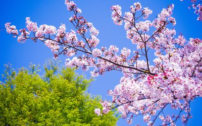 Spring-is-in-the-air-600x375